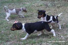 RECREAÇÃO CANIL PEDRA DE GUARATIBA!  Terrier Brasileiro (Fox Paulistinha) Filhotes: http://www.canilpguaratiba.com/html/n6letrai_tb.html Facebook: http://pt-br.facebook/canilpedradeguaratiba Instagram: http://instagram.com/canilpguaratiba #canilpedradeguaratiba  #canilpedradeguaratibafoxpaulistinha  #canilpedradeguaratibaterrierbrasileiro  #foxpaulistinha  #terrierbrasileiro  #foxpaulistinhacanilpedradeguaratiba  #terrierbrasileirocanilpedradeguaratiba