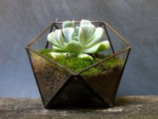 Plants & Terrariums in Gardener & Naturalist - Etsy Gift Ideas