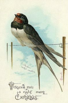 swallow on the line...