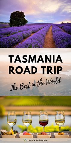 Everyone loves a road trip, and a Tasmania road trip is not only the best road trip in Australia - but it's the best in the world! Small size, amazing beaches, soaring mountains, delicious food and quirky animals - it's got the lot! #roadtrip  #tasmania #holiday #inspiration | road trip planning | road trip inspiration | Australia road trip | 📷: Brian Dullaghan, Jason Charles Hill, Rob Burnett