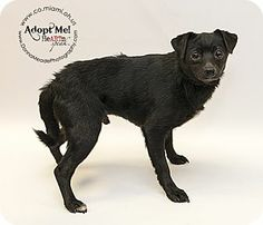 Adopted❤️ URGENT! Troy, OH - Terrier (Unknown Type, Small) Mix. Meet CJ a Dog for Adoption.
