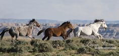Three Run  Fine Art Wild Horse Photograph by WildHoofbeats on Etsy, $42.00