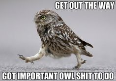 Get out the way! Got important owl shit to do!