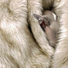 Fancy - Faux Fur Dog Blanket