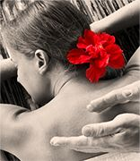 Wordpress, Massage, Board