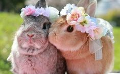 19 S e Babyh schen Cute Baby Bunnies 25 Baby Animals Super Cute, Cute Baby Bunnies, Cute Little Animals, Cute Funny Animals, Cute Babies, The Animals, Baby Animals Pictures, Cute Animal Pictures, Owl Pictures
