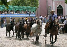 San Antonio, Camel, Horses, Explore, Animals, Argentina, Animales, Animaux, Camels