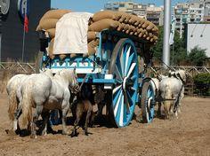 big wagon 1