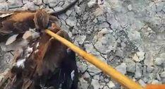 Homem Impede Cobra De Estrangular Falcão