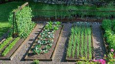 Mit termeljünk a kiskertben? Jó tanácsok kezdőknek és haladóknak.