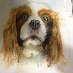 Sonny King Charles spaniel in watercolour, fast paint technique, needs completing