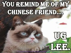 Grumpy cat, grumpy cat meme, grumpy cat humor, grumpy cat quotes, grumpy cat funny …For the best humour and hilarious jokes visit www.