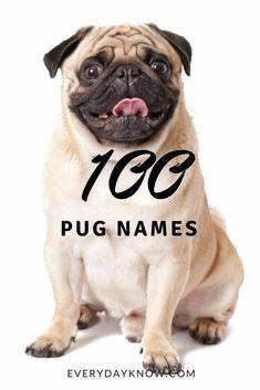 100 Pug Names Pug Names Pugs Girl Pug Names
