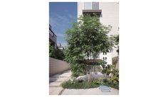 花木図鑑:シマトネリコ | 庭を楽しむ家 庭づくり・エクステリア | ミサワホーム 特長 常緑ですが葉が細かく軽い雰囲気が楽しめます。病虫害に強くほとんど虫はつきません。洋風によく合う樹木です。開花期はおよそ5、6月ごろ。 植栽・移植 日当たりの良い場所を好みます。湿り気のある土地を好み、極度の乾燥を嫌うので夏場は注意します。 管理・選定 成長が早く葉が良く茂りますが、シマトネリコの清涼感は枝葉が茂りすぎると失われてしまいます。11月~3月頃、毎年切り戻し選定をして、枝を間引いて透け感のある樹形を保つようにします。 繁殖 実生、挿木