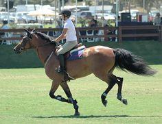 Exercises to Improve & Stengthen Horseback Riding Posture