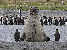 photobombs animals | Animal Photobombs – 20 Photos Animal Photobombs (16) – the JAW ...