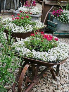 Flowers in old vintage wheel barrows