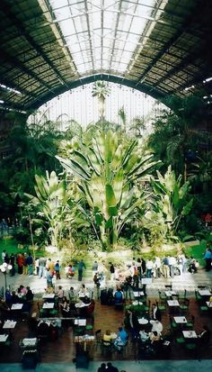 Estación de Atocha Renfe. Jardín tropical. Madrid