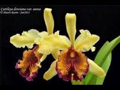 tips para sus orquídeas, buenisimos. - YouTube