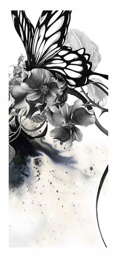 Beautiful Black and White Butterfly -kahori maki
