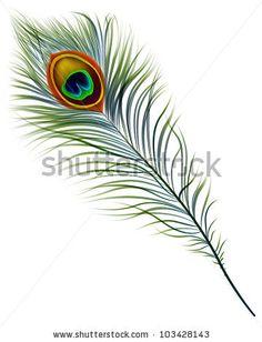 Vector isolated peacock feather. EPS 10 by Yuliya Koldovska, via Shutterstock