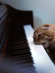 The Piano Biter | The 100 Most Important Cat Pictures Of All Time