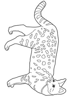 cat color pages printable  cat and kitten coloring pages free nd