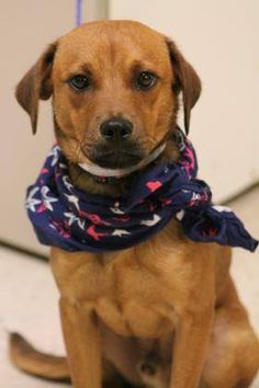 NAME: Cowan ANIMAL ID:28276021 BREED:terrier mix SEX:male EST. AGE: 2yr Est Weight:16 lbs Health:heartworm neg Temperament:dog friendly, people friendly ADDITIONAL INFO: RESCUE PULL FEE:$49 Intake date:7/1 Available:now