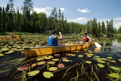 https://flic.kr/p/8ggNcD | Canoeing | Paddling on the Kelso River through lily pads. Boundary Waters Canoe Area Wilderness, MN.