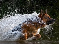 @ Kate Doster.  GREAT BOARD.  Thanks for sharing!!!  The German Shepherd doing his second best job: chasing!
