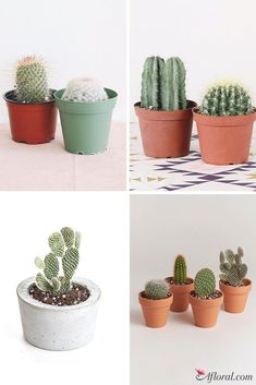 Find live cacti, succulents, and live house plants at Afloral.com
