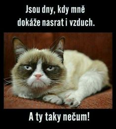 Super Funny Sayings And Quotes Humor Grumpy Cat Ideas Funny Sign Fails, Funny Couples Memes, Super Funny Quotes, Funny Quotes For Teens, Funny Sayings, Funny Animals With Captions, Funny Animal Pictures, Funny Baby Photography, Funny Supernatural Memes