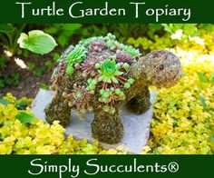 Simply Succulents Nursery  I have ordered from them before and they have a great product and great customer service.  Kathie