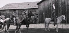 Image result for civil war horses