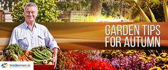 """Vaizdo rezultatas pagal užklausą """"autumn garden tips"""" Autumn Garden, Garden Tips, Fall Season, Seasons, Outdoor, Ideas, Autumn, Outdoors, Seasons Of The Year"""