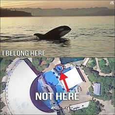 Seaworld should stop imprisoning and exploiting Orcas. If you have not seen it, please watch Blackfish, a documentary by CNN, it will break your heart.