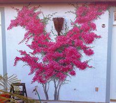 San Diego Bouganvilla Outdoor - Mural Photo in San Diego, California