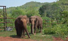 Maia e Guida. Santuário de Elefantes na Chapada dos Guimarães