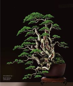 Bonsai Tree Care for Beginners Bonsai Tree Types, Bonsai Tree Care, Indoor Bonsai Tree, Mini Bonsai, Bonsai Trees, Bonsai Forest, Bonsai Garden, Tree Forest, Garden Trees