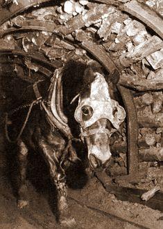 Pit Pony - 1928