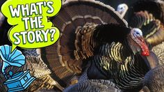 It's time to talk turkey and learn the real truth and deep, dark secrets behind everyone's second favourite October holiday.