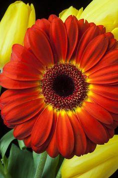 Linda flor,Para ti querida madre.
