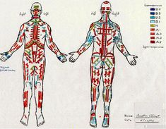 The Bodymap - A precise diagnostic tool for Psychotherapy Body Map, Body Therapy