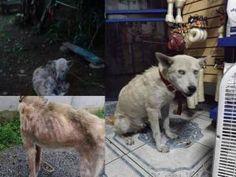 FERIA DE SALUD Y ADOPCIÓN DE PERROS Y GATOS. http://www.desktopcostarica.com/eventos/2014/feria-de-salud-y-adopcion-de-perros-y-gatos #CostaRica