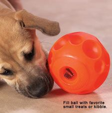 Dog food puzzle toys-- great ones include Omega Paw Tricky Treat Ball, Kongs, and the Kong Wobbler (let your dog play for his food)