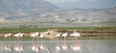 Oroklini Lake is one of only seven natural wetlands in Cyprus. The site is located about 10km from the city of Larnaka town and south of the village of Voroklini, in the District of Larnaka.