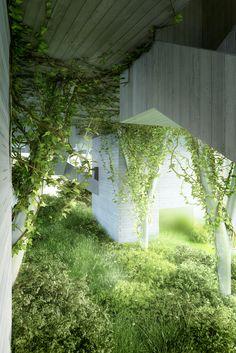 //Hanging Vines - Nature reclaiming the original