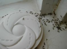 How Can I Keep Ants Out of My Kitchen? - EcoTek Termite and Pest Control