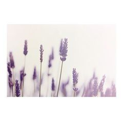 lavender photograph, flower photograph, purple, summer photograph,... ❤ liked on Polyvore featuring backgrounds, flowers, lavender and pictures