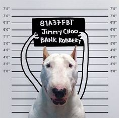 Studio Playground likest this: Brazilian illustrator, Rafael Mantesso loves to put his pet bull terrier, named Jimmy Choo, into funny and creative compositions…